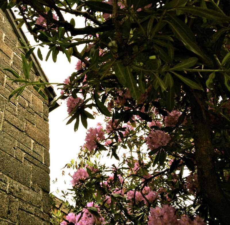 Flowers Outside Loveless Building